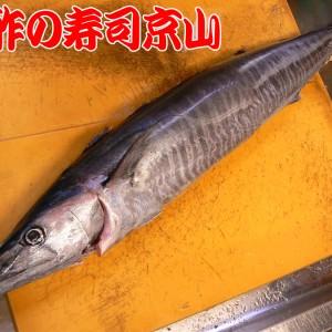 黒酢の寿司京山 カマスサワラ