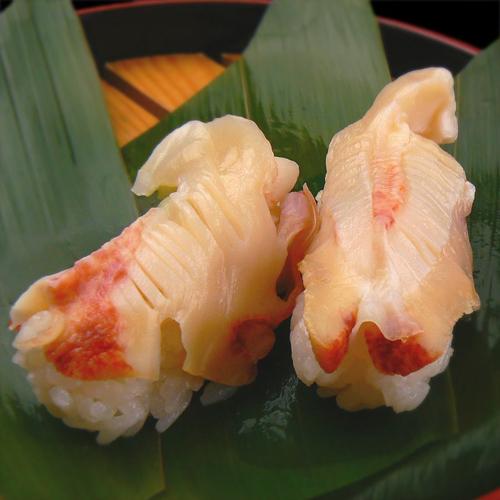 にぎり 寿司 法螺貝