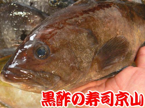 千代田区 寿司 出前 新富