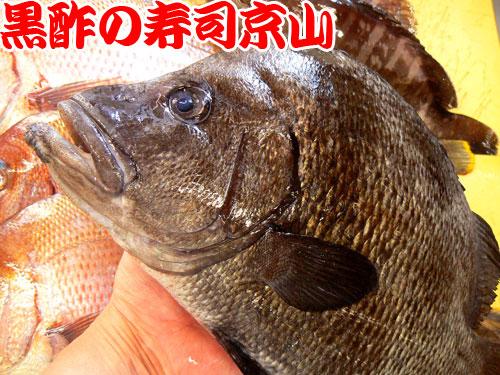 ヒゲ鯛 寿司