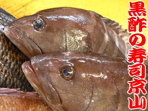 マハタ 天然地魚