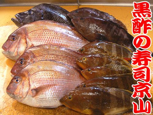 天然地魚 和歌山県産