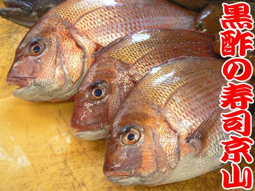 真鯛 天然地魚