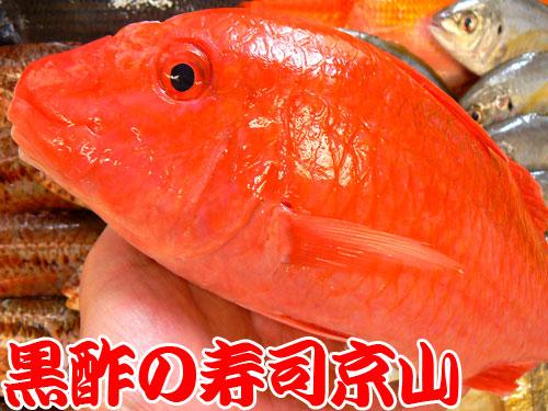 渋谷区までお寿司を出前します!