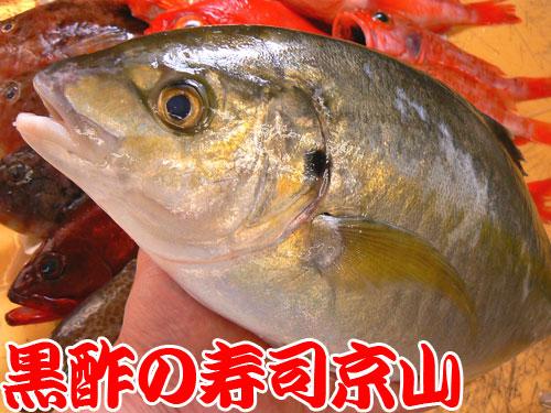 墨田区にある出前専門の寿司屋 京山です!
