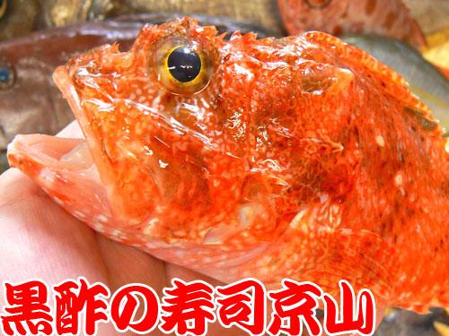 千代田区内のお寿司の出前はおまかせください。
