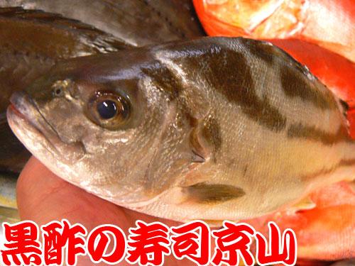 墨田区 寿司 出前 東駒形