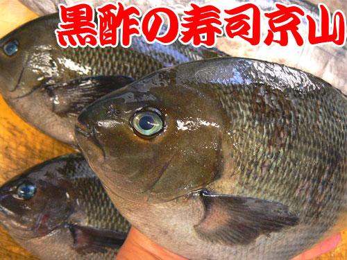 江東区 寿司 出前 塩浜