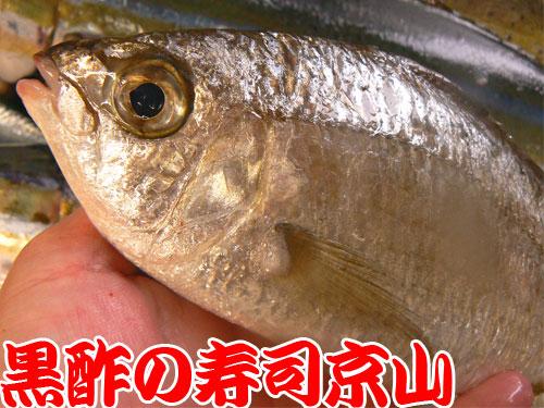 新宿区 寿司 出前 神楽河岸