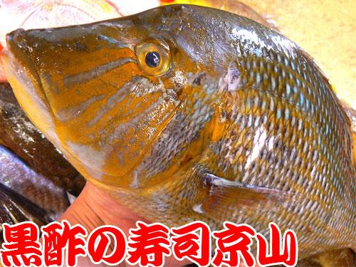 中央区 宅配寿司 日本橋久松町