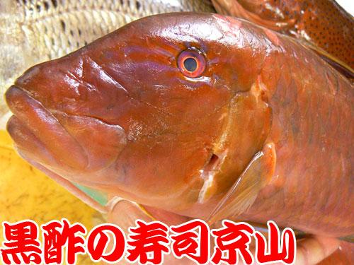 千代田区 宅配寿司 神田神保町