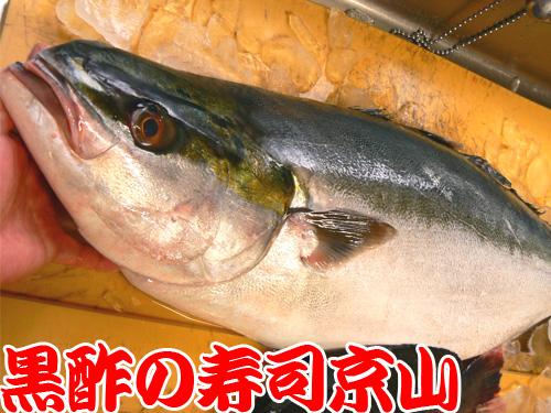 台東区 宅配寿司 谷中