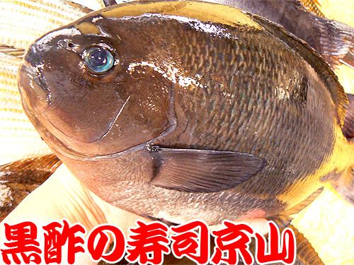 江東区 寿司 出前 牡丹