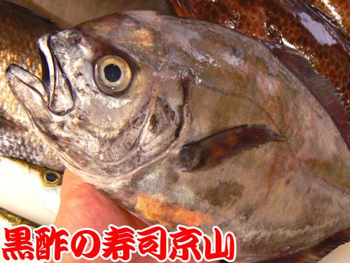 千代田区 宅配寿司 有楽町