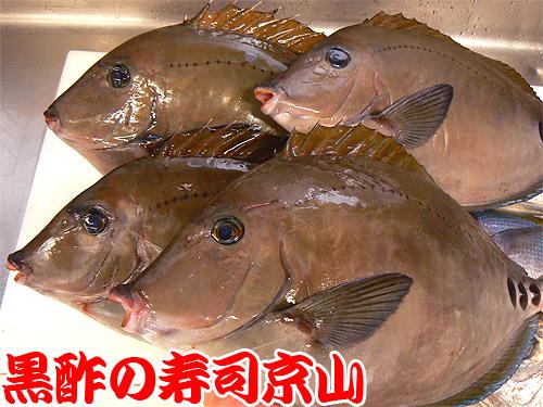 千代田区 宅配寿司 富士見