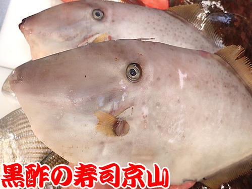 台東区 宅配寿司 寿