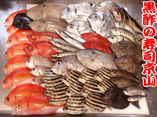 マイナー魚