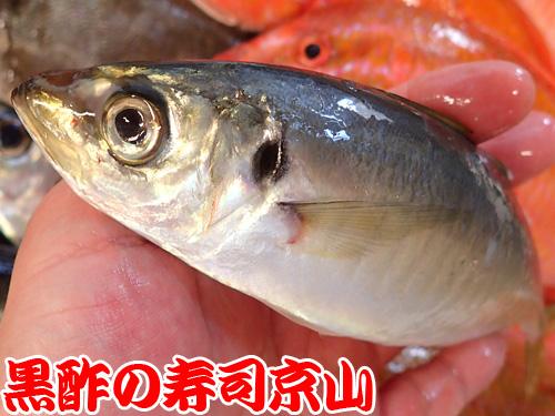中央区 明石町 宅配寿司