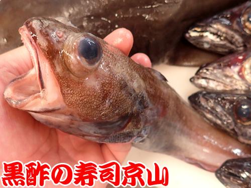 ドンコ エゾイソアイナメ