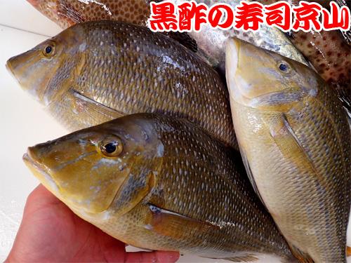 日本橋堀留町 納会 寿司