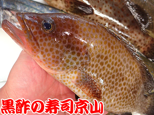 日本橋本石町 納会 寿司