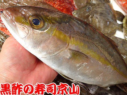 美味しい 宅配寿司 渋谷区 代官山町