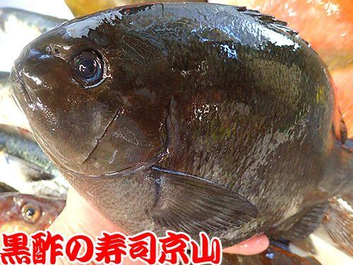 美味しい 宅配寿司 葛飾区 東立石
