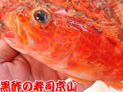 美味しい宅配寿司 台東区 駒形