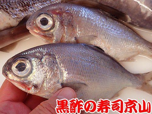 美味しい 宅配寿司 神田美土代町