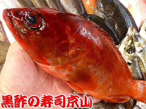 美味しい寿司 出前 江戸川区 東瑞江