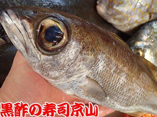 美味しい宅配寿司 江東区 枝川