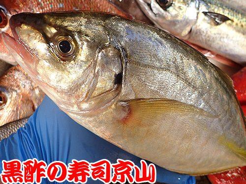 美味しい寿司 出前 江東区 塩浜