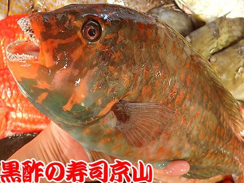 美味しい宅配寿司 江戸川区 北葛西