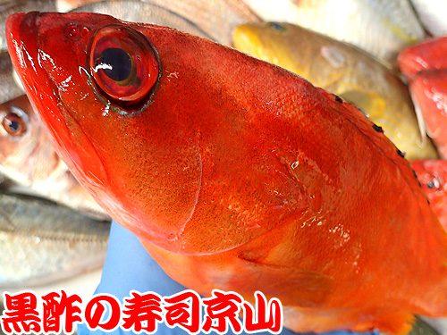 美味しい寿司 出前 江東区 清澄