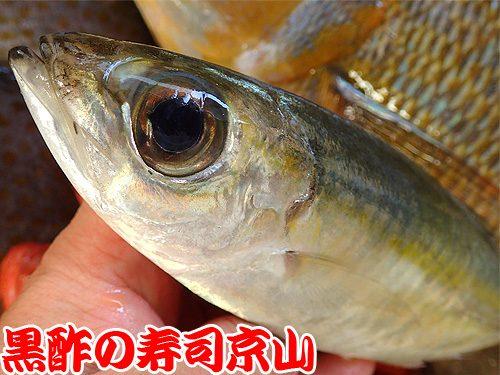 寿司 出前 台東区 寿
