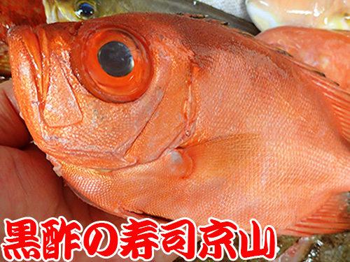 葛飾区 西新小岩 宅配寿司 年末年始 出前