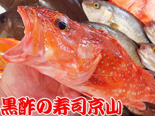 墨田区 両国 宅配寿司 年末年始 出前