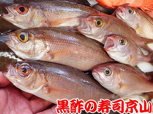 墨田区 向島 宅配寿司 年末年始 出前